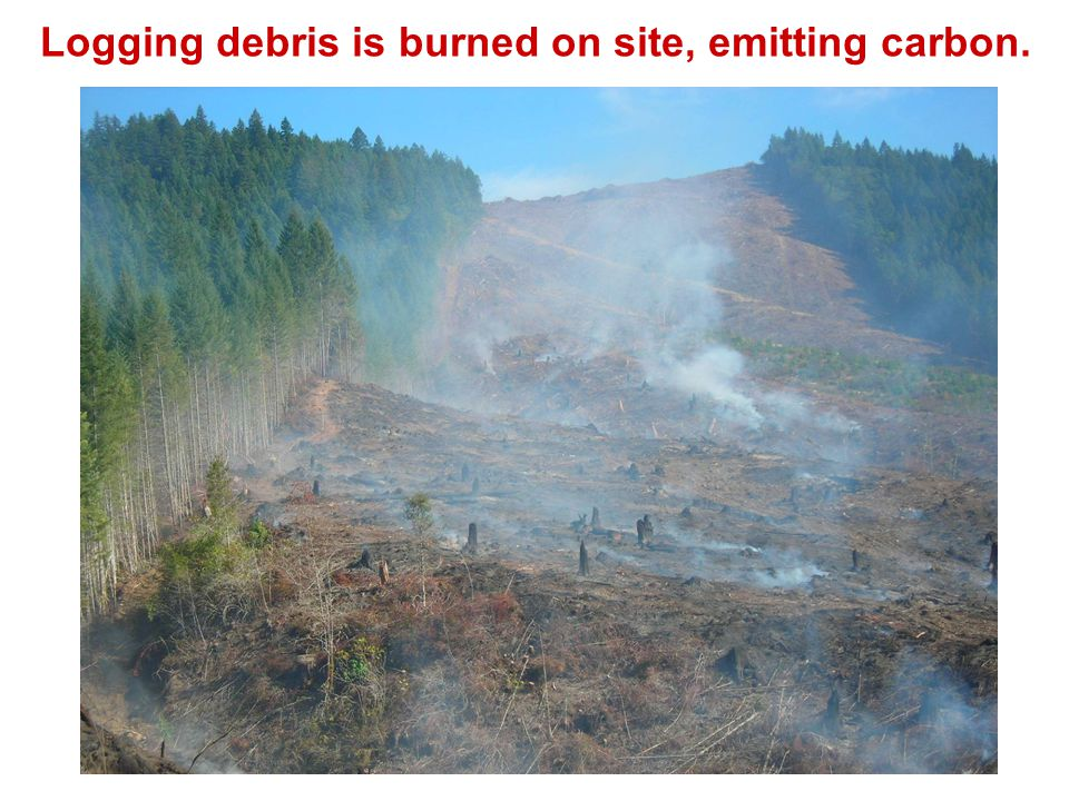 Logging debris is burned on site, emitting carbon.