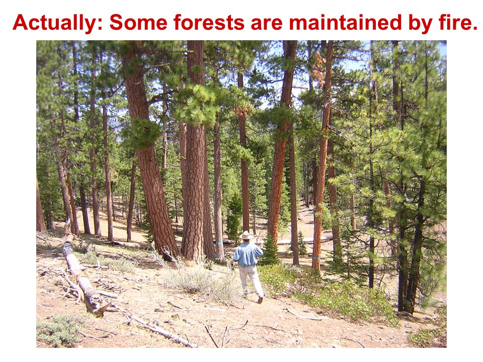 Actually: Some forests are maintained by fire.