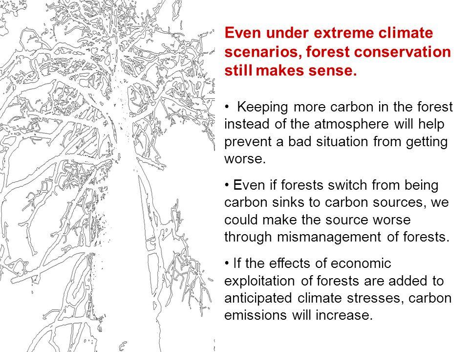 Even under extreme climate scenarios, forest conservation still makes sense.
