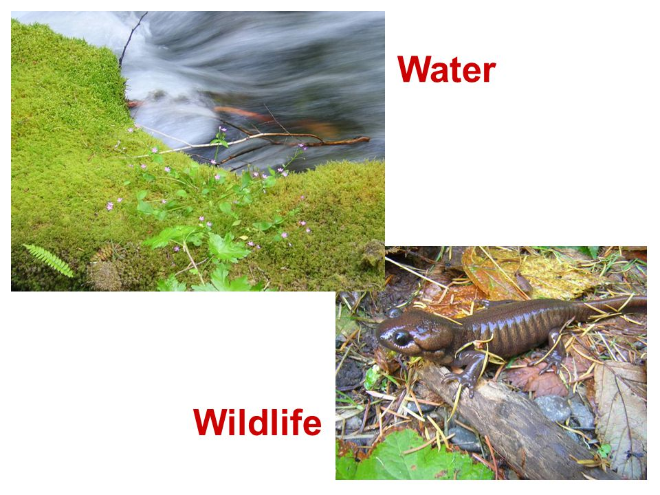 Water Wildlife