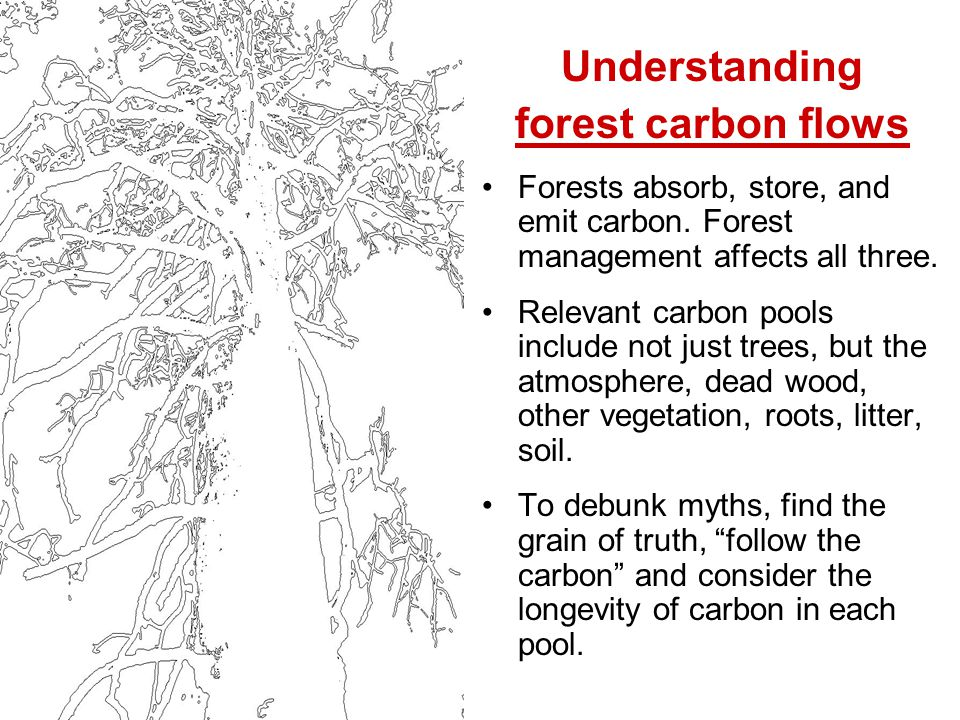 Understanding forest carbon flows Forests absorb, store, and emit carbon.
