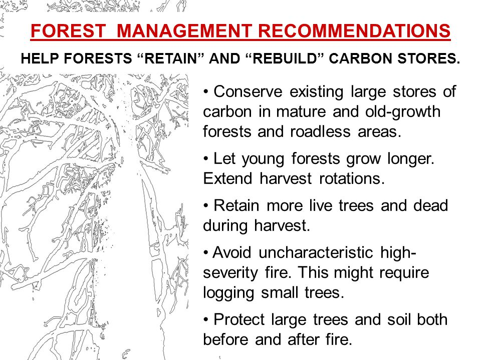 Conserve existing large stores of carbon in mature and old-growth forests and roadless areas.
