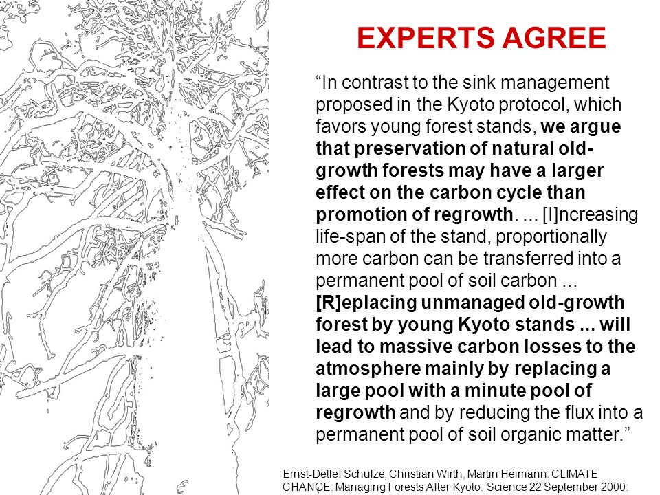 EXPERTS AGREE In contrast to the sink management proposed in the Kyoto protocol, which favors young forest stands, we argue that preservation of natural old- growth forests may have a larger effect on the carbon cycle than promotion of regrowth....