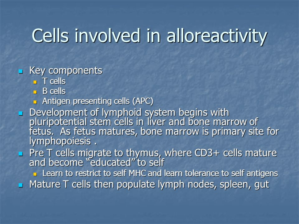 Cells involved in alloreactivity Key components Key components T cells T cells B cells B cells Antigen presenting cells (APC) Antigen presenting cells (APC) Development of lymphoid system begins with pluripotential stem cells in liver and bone marrow of fetus.