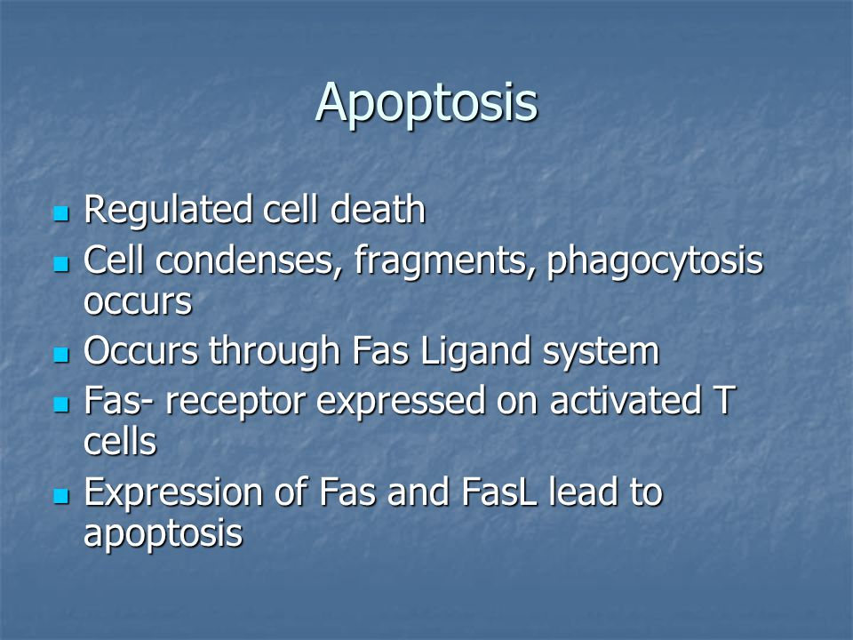 Apoptosis Regulated cell death Regulated cell death Cell condenses, fragments, phagocytosis occurs Cell condenses, fragments, phagocytosis occurs Occurs through Fas Ligand system Occurs through Fas Ligand system Fas- receptor expressed on activated T cells Fas- receptor expressed on activated T cells Expression of Fas and FasL lead to apoptosis Expression of Fas and FasL lead to apoptosis