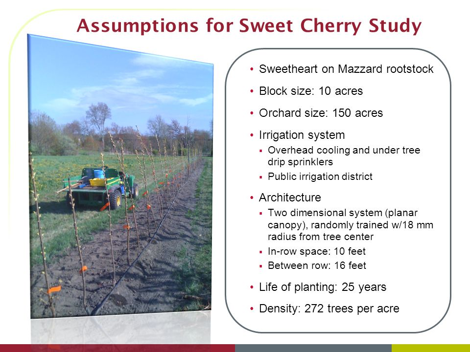 Assumptions for Sweet Cherry Study Sweetheart on Mazzard rootstock Block size: 10 acres Orchard size: 150 acres Irrigation system  Overhead cooling and under tree drip sprinklers  Public irrigation district Architecture  Two dimensional system (planar canopy), randomly trained w/18 mm radius from tree center  In-row space: 10 feet  Between row: 16 feet Life of planting: 25 years Density: 272 trees per acre