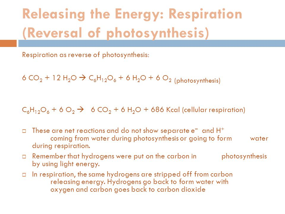 Where does respiration occur. Normal respiration has two phases: 1.