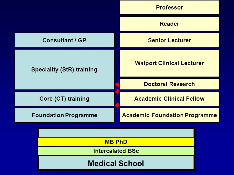 Intercalated BSc MB PhD Medical School Foundation Programme Core (CT) training Speciality (StR) training Consultant / GP Academic Foundation Programme Academic Clinical Fellow Doctoral Research Walport Clinical Lecturer Senior Lecturer Reader Professor