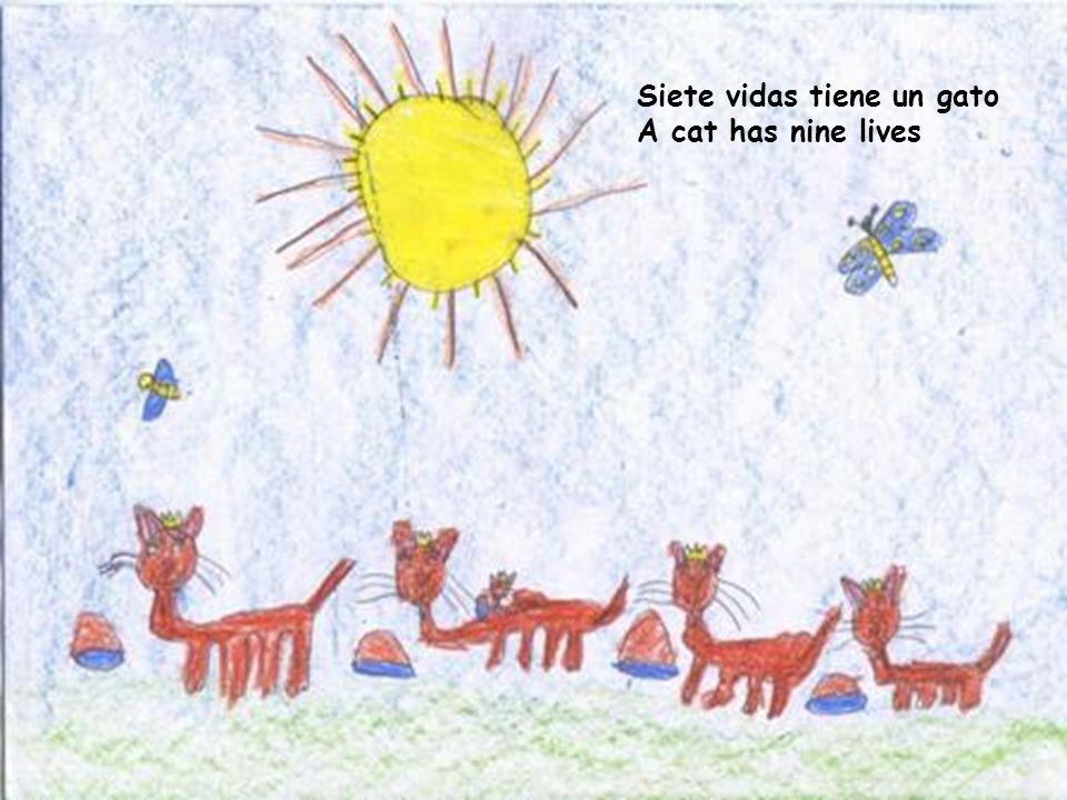 Siete vidas tiene un gato A cat has nine lives