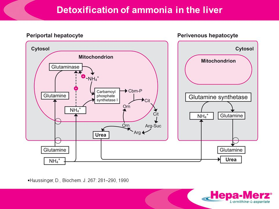 Detoxification of ammonia in the liver  H ä ussinger, D., Biochem. J. 267: 281 – 290, 1990