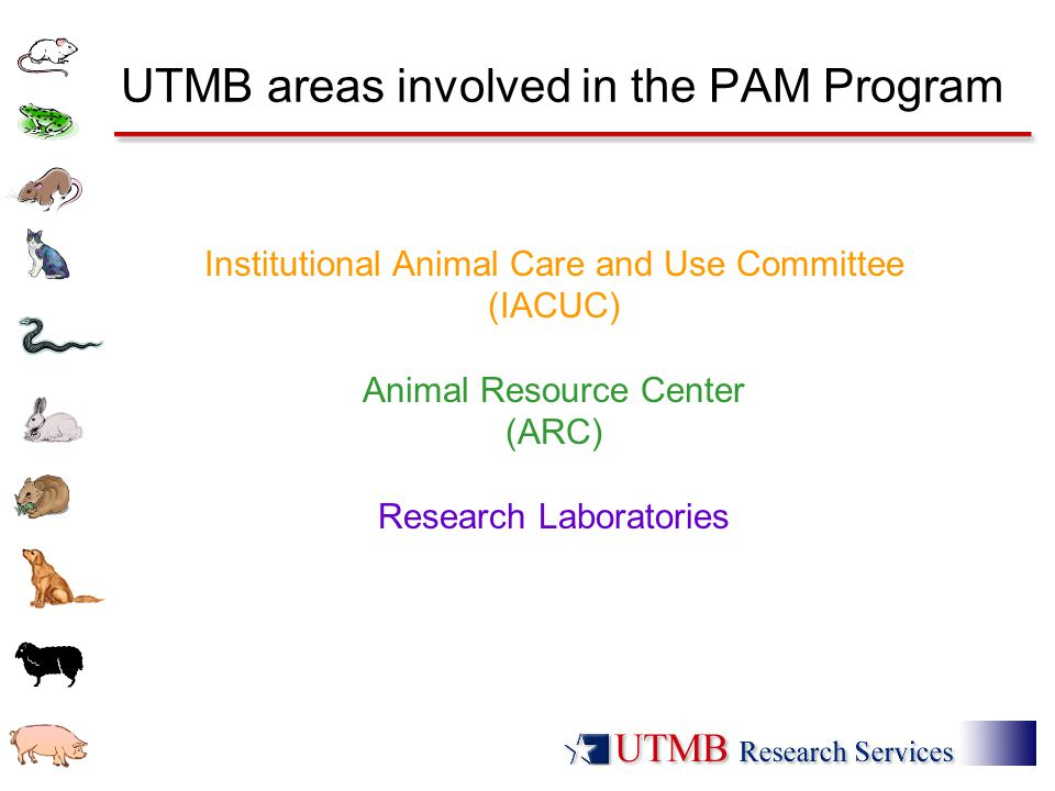 UTMB areas involved in the PAM Program Institutional Animal Care and Use Committee (IACUC) Animal Resource Center (ARC) Research Laboratories