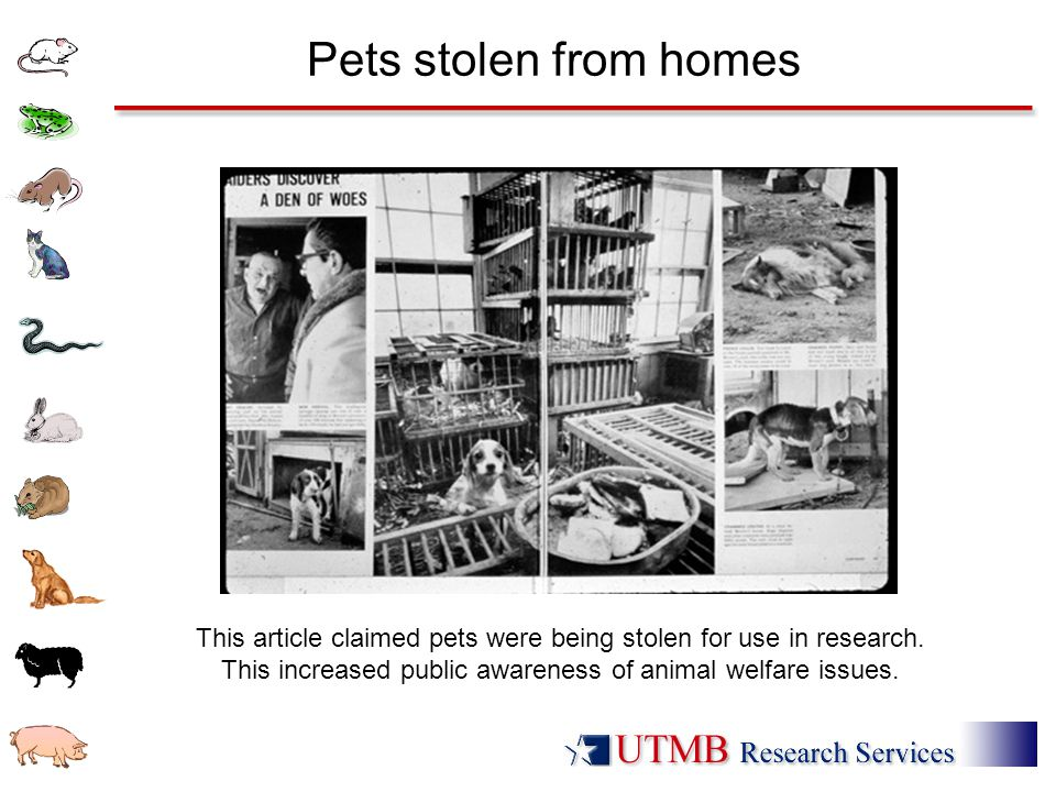 Pets stolen from homes This article claimed pets were being stolen for use in research.