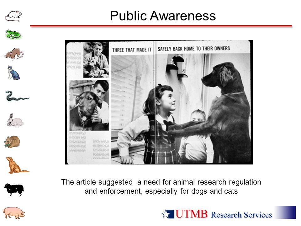 Public Awareness The article suggested a need for animal research regulation and enforcement, especially for dogs and cats