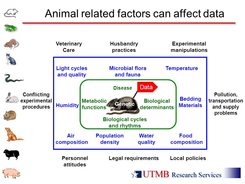 Animal related factors can affect data Data Genetic Disease Biological determinants Biological cycles and rhythms Metabolic functions Bedding Materials Water quality Temperature Food composition Humidity Air composition Microbial flora and fauna Light cycles and quality Population density Personnel attitudes Local policiesLegal requirements Husbandry practices Experimental manipulations Conflicting experimental procedures Pollution, transportation and supply problems Veterinary Care
