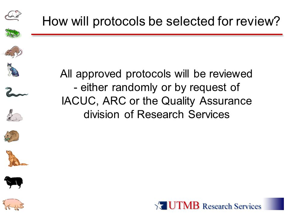 How will protocols be selected for review.