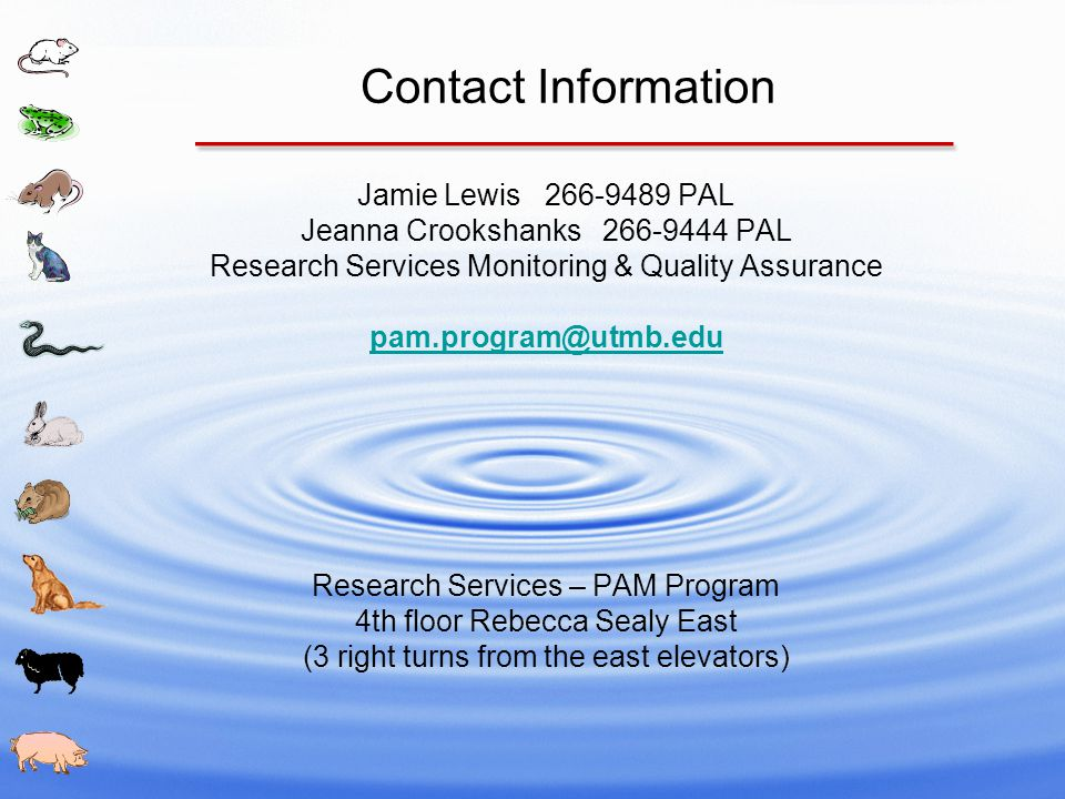 Contact Information Jamie Lewis 266-9489 PAL Jeanna Crookshanks 266-9444 PAL Research Services Monitoring & Quality Assurance pam.program@utmb.edu Research Services – PAM Program 4th floor Rebecca Sealy East (3 right turns from the east elevators)