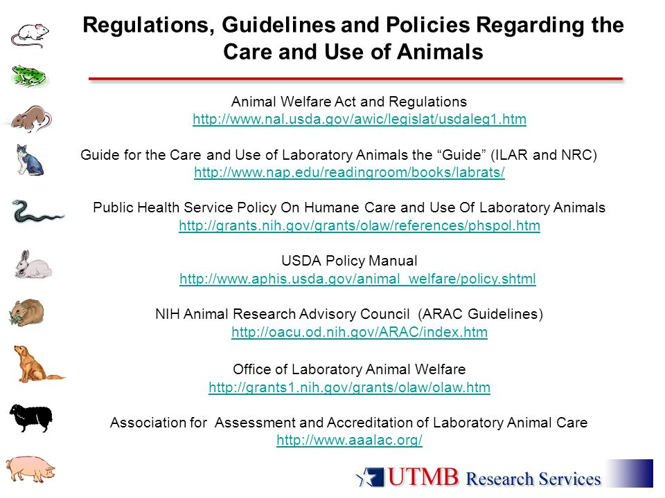 Animal Welfare Act and Regulations http://www.nal.usda.gov/awic/legislat/usdaleg1.htmhttp://www.nal.usda.gov/awic/legislat/usdaleg1.htm Guide for the Care and Use of Laboratory Animals the Guide (ILAR and NRC) http://www.nap.edu/readingroom/books/labrats/ Public Health Service Policy On Humane Care and Use Of Laboratory Animals http://grants.nih.gov/grants/olaw/references/phspol.htmhttp://grants.nih.gov/grants/olaw/references/phspol.htm USDA Policy Manual http://www.aphis.usda.gov/animal_welfare/policy.shtmlhttp://www.aphis.usda.gov/animal_welfare/policy.shtml NIH Animal Research Advisory Council (ARAC Guidelines) http://oacu.od.nih.gov/ARAC/index.htmhttp://oacu.od.nih.gov/ARAC/index.htm Office of Laboratory Animal Welfare http://grants1.nih.gov/grants/olaw/olaw.htm Association for Assessment and Accreditation of Laboratory Animal Care http://www.aaalac.org/ Regulations, Guidelines and Policies Regarding the Care and Use of Animals