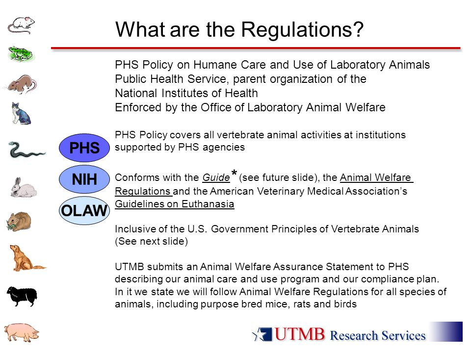 What are the Regulations? PHS Policy on Humane Care and Use of Laboratory Animals Public Health Service, parent organization of the National Institute