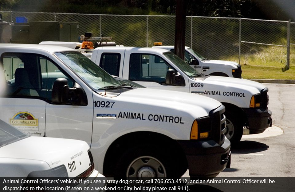 Animal Control Officers' vehicle.