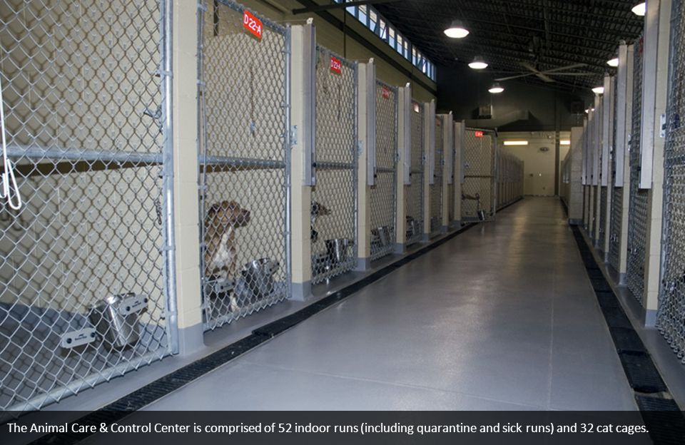 The Animal Care & Control Center is comprised of 52 indoor runs (including quarantine and sick runs) and 32 cat cages.
