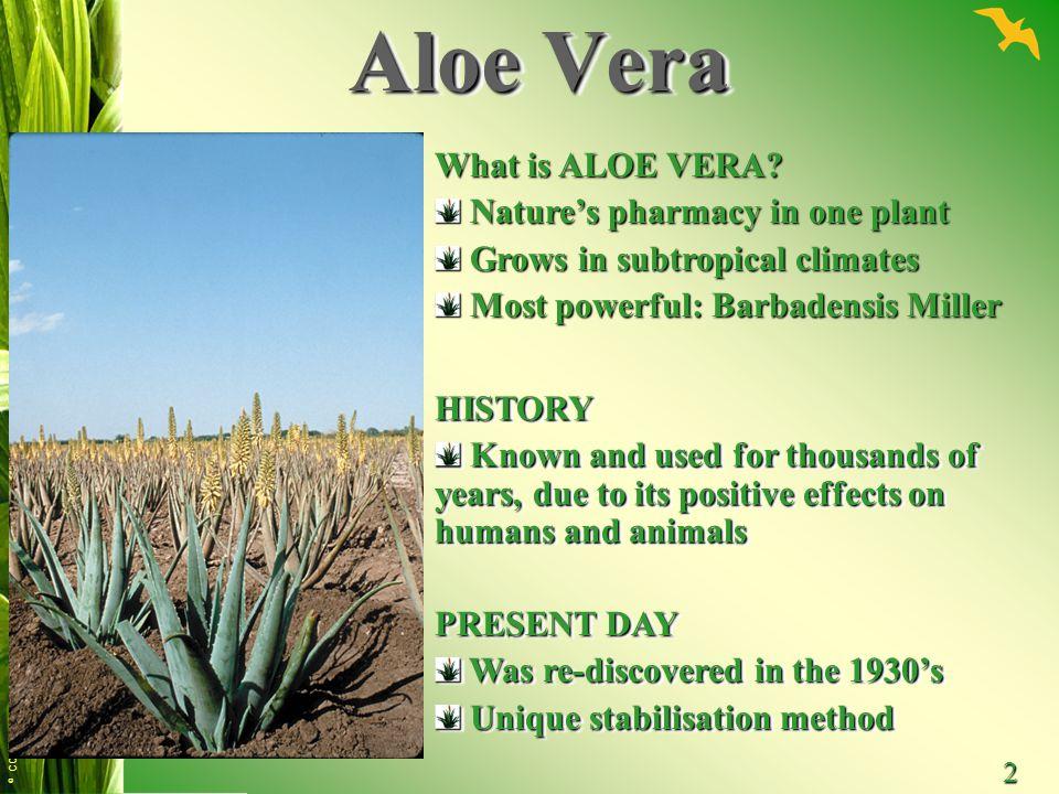 © CONTENTO 2 Aloe Vera What is ALOE VERA? Nature's pharmacy in one plant Nature's pharmacy in one plant Grows in subtropical climates Grows in subtrop
