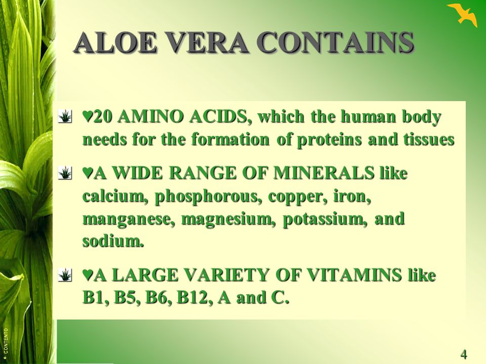 © CONTENTO 4 ALOE VERA CONTAINS ♥20 AMINO ACIDS, which the human body needs for the formation of proteins and tissues ♥A WIDE RANGE OF MINERALS like calcium, phosphorous, copper, iron, manganese, magnesium, potassium, and sodium.
