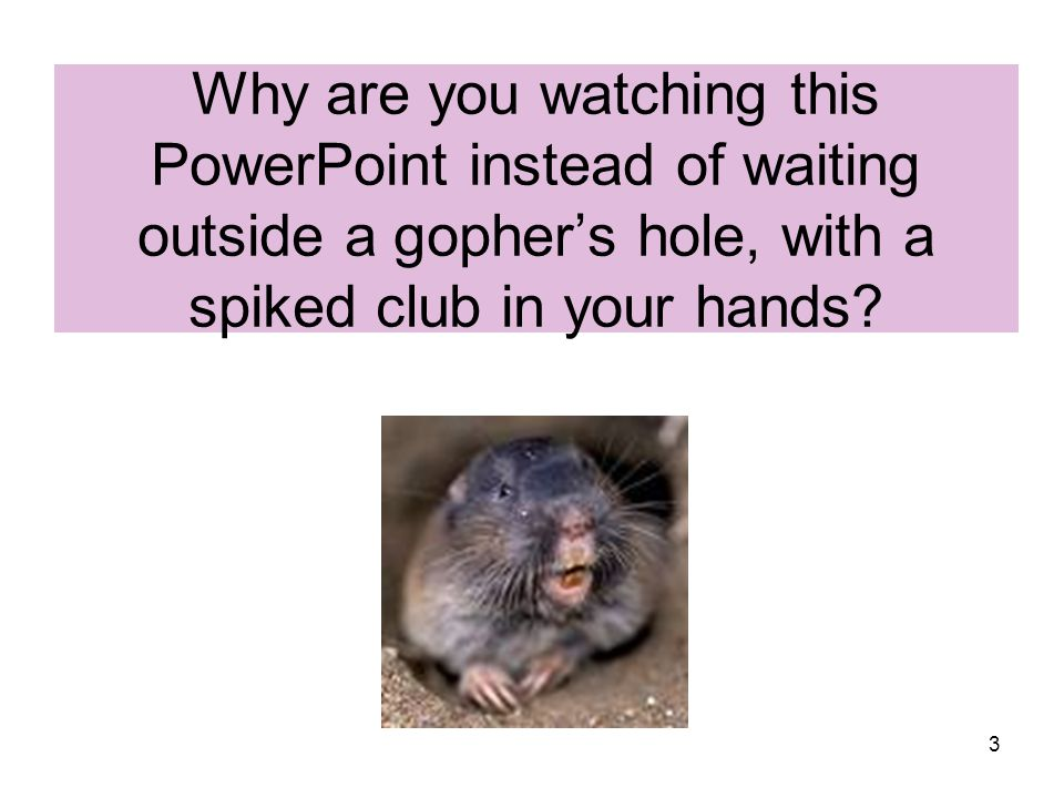 3 Why are you watching this PowerPoint instead of waiting outside a gopher's hole, with a spiked club in your hands?
