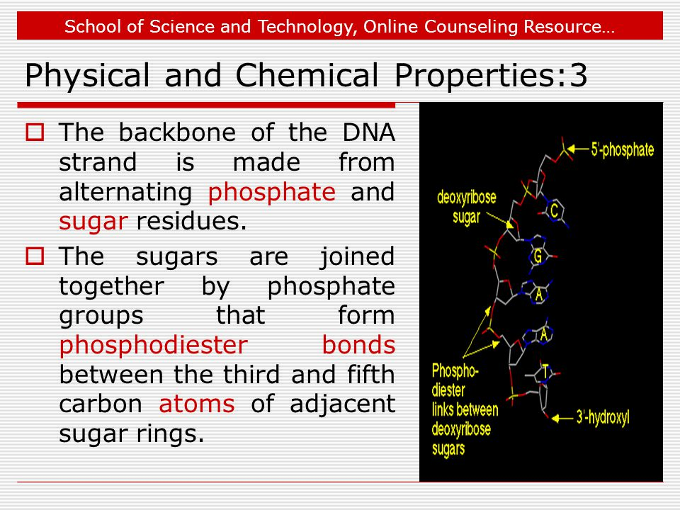School of Science and Technology, Online Counseling Resource… Physical and Chemical Properties:3  The backbone of the DNA strand is made from alternating phosphate and sugar residues.