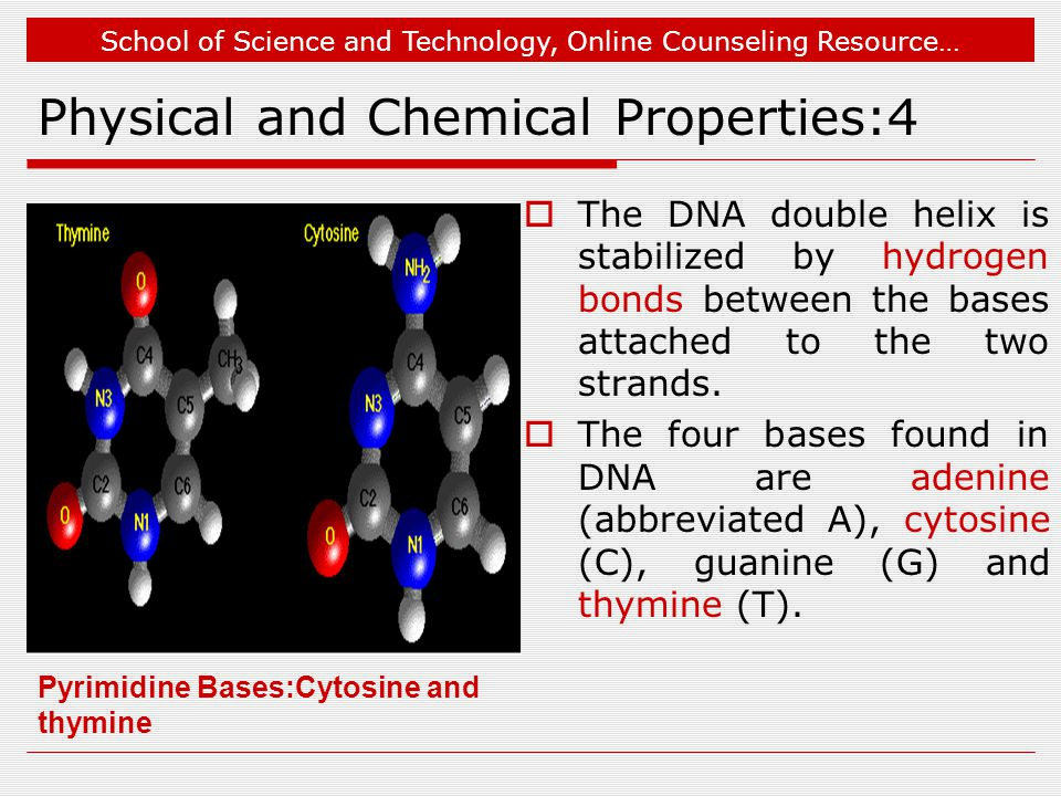 School of Science and Technology, Online Counseling Resource… Physical and Chemical Properties:4  The DNA double helix is stabilized by hydrogen bonds between the bases attached to the two strands.