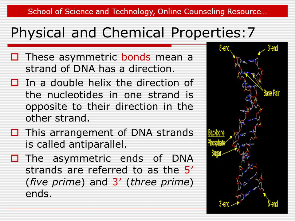 School of Science and Technology, Online Counseling Resource… Physical and Chemical Properties:7  These asymmetric bonds mean a strand of DNA has a direction.