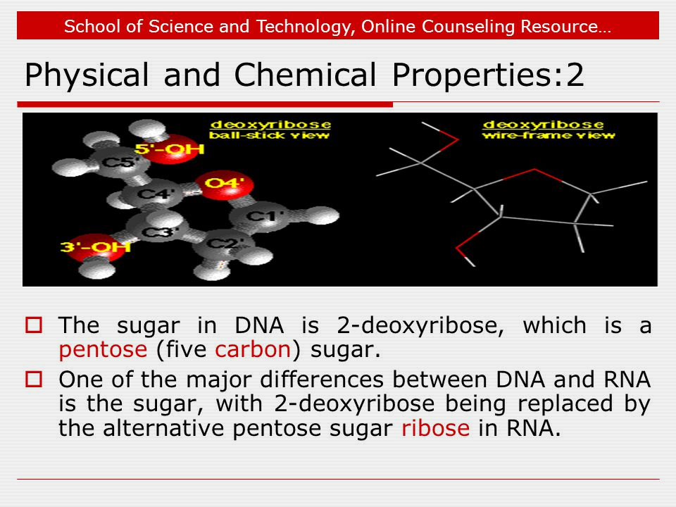 School of Science and Technology, Online Counseling Resource… Physical and Chemical Properties:2  The sugar in DNA is 2-deoxyribose, which is a pentose (five carbon) sugar.
