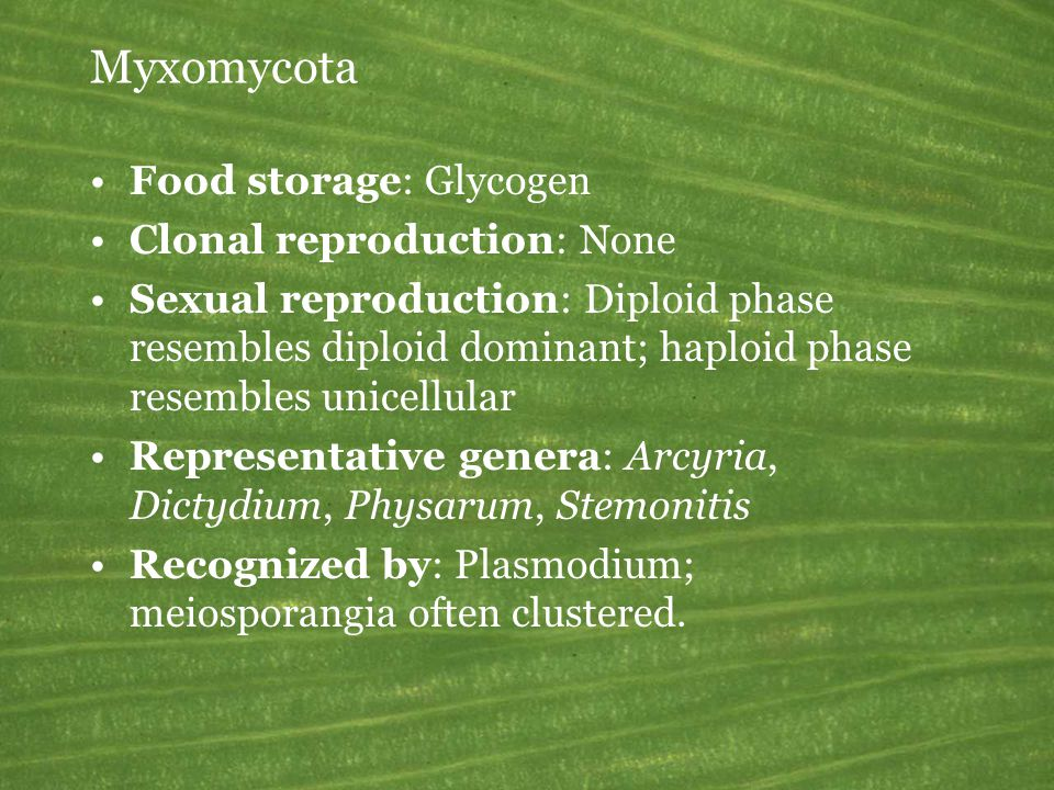 Myxomycota Food storage: Glycogen Clonal reproduction: None Sexual reproduction: Diploid phase resembles diploid dominant; haploid phase resembles unicellular Representative genera: Arcyria, Dictydium, Physarum, Stemonitis Recognized by: Plasmodium; meiosporangia often clustered.