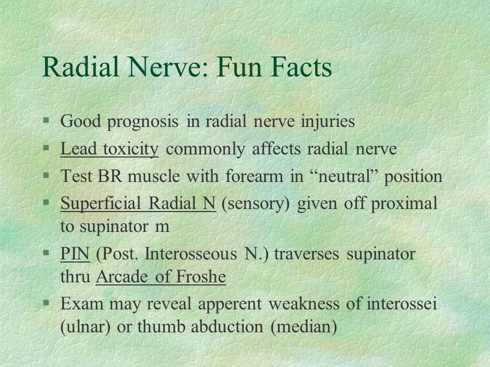 "Radial Nerve: Fun Facts §Good prognosis in radial nerve injuries §Lead toxicity commonly affects radial nerve §Test BR muscle with forearm in ""neutral"