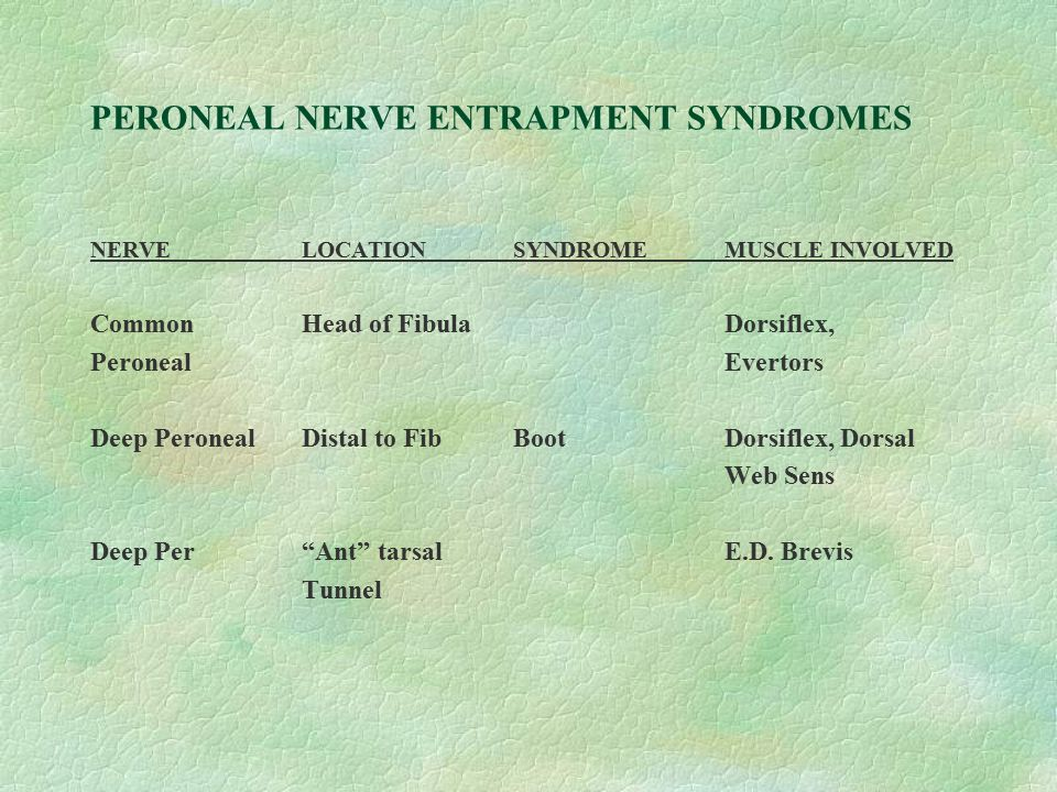 PERONEAL NERVE ENTRAPMENT SYNDROMES NERVELOCATIONSYNDROMEMUSCLE INVOLVED Common Head of FibulaDorsiflex, PeronealEvertors Deep PeronealDistal to FibBo
