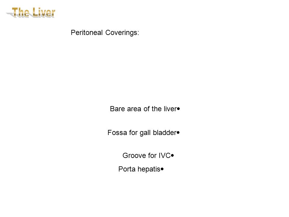 Peritoneal Coverings:  Bare area of the liver  Fossa for gall bladder  Groove for IVC  Porta hepatis