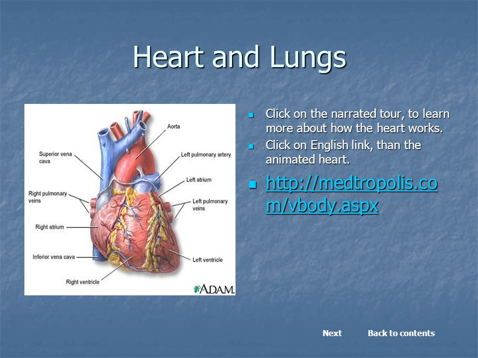 Heart and Lungs Click on the narrated tour, to learn more about how the heart works.