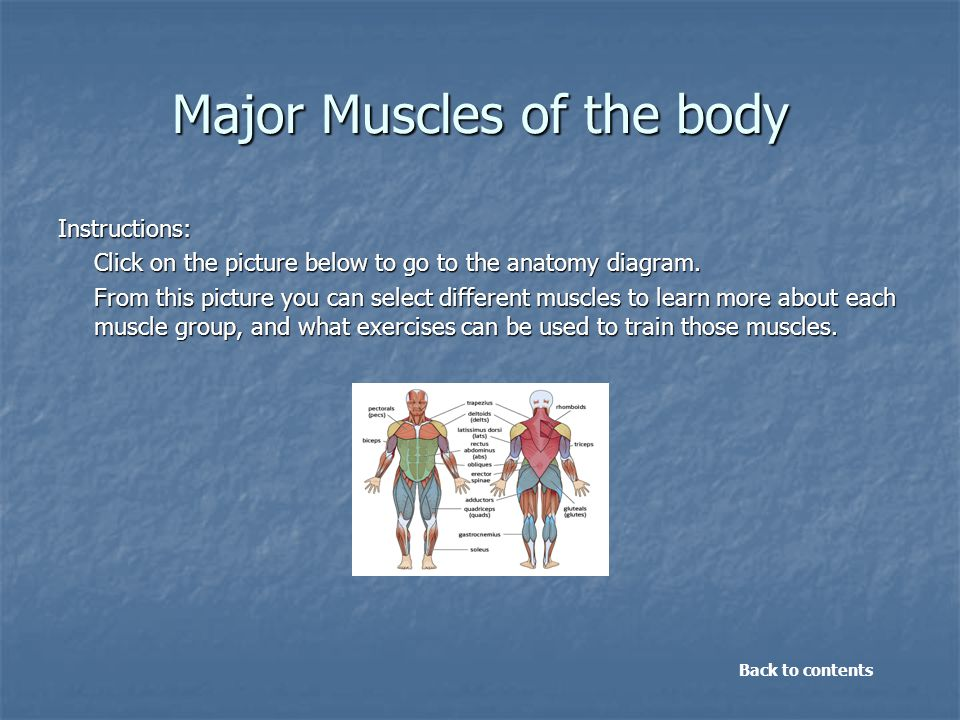 Major Muscles of the body Instructions: Click on the picture below to go to the anatomy diagram. From this picture you can select different muscles to