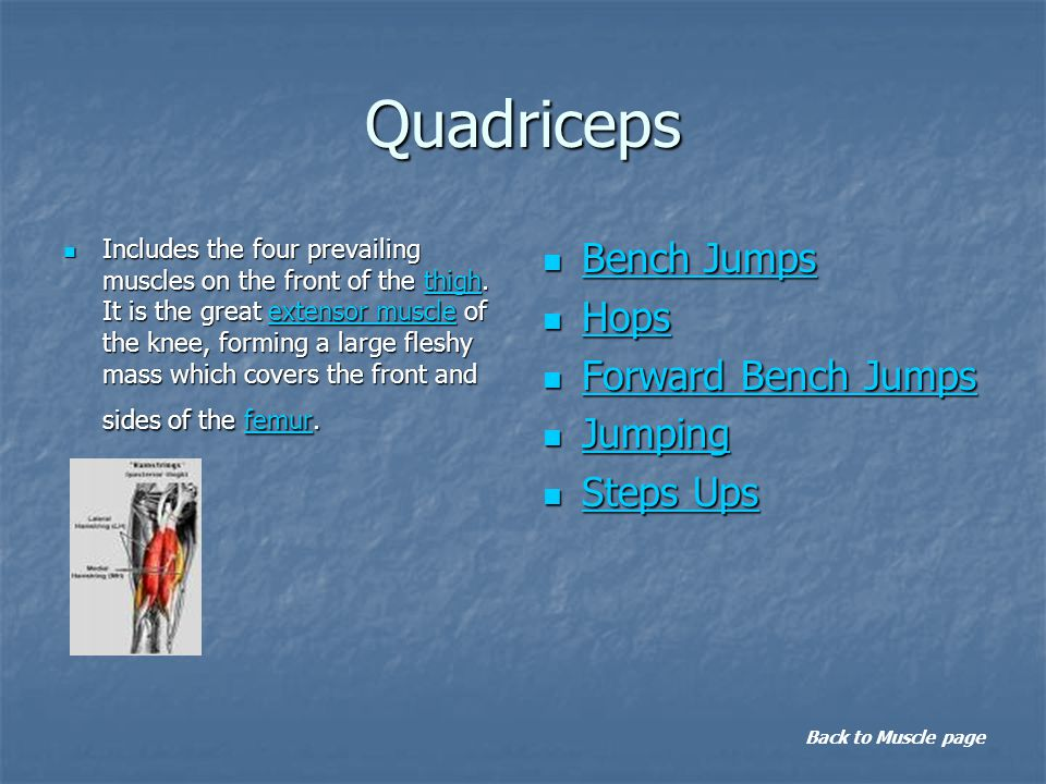 Quadriceps Includes the four prevailing muscles on the front of the thigh. It is the great extensor muscle of the knee, forming a large fleshy mass wh