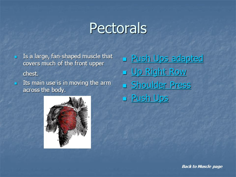 Pectorals Is a large, fan-shaped muscle that covers much of the front upper chest.