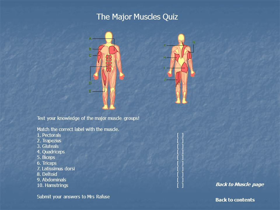 Test your knowledge of the major muscle groups. Match the correct label with the muscle.