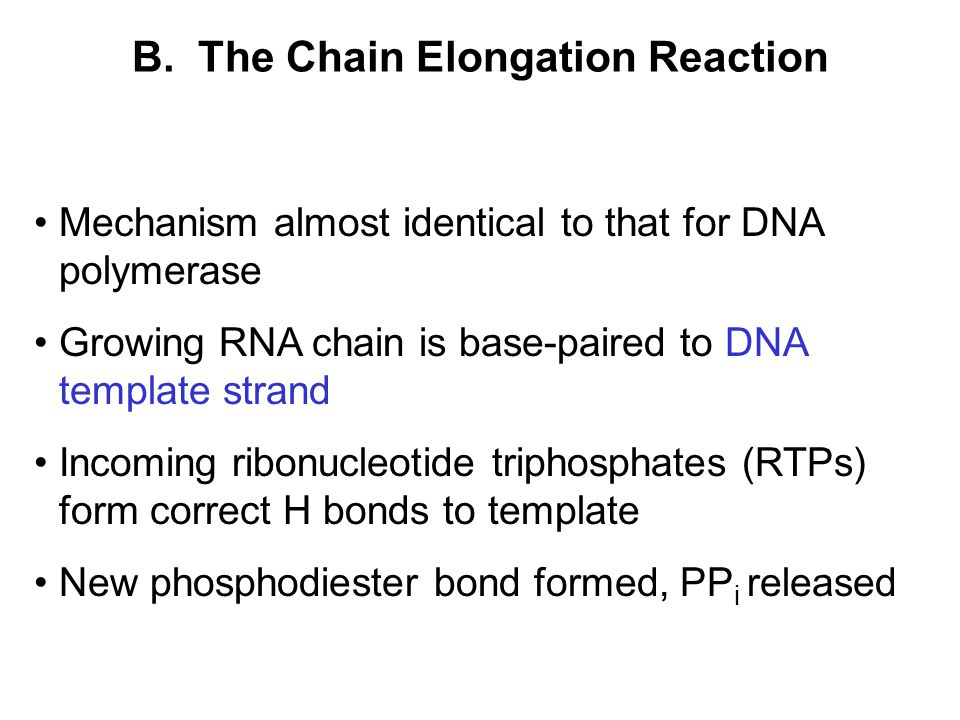 B. The Chain Elongation Reaction Mechanism almost identical to that for DNA polymerase Growing RNA chain is base-paired to DNA template strand Incomin
