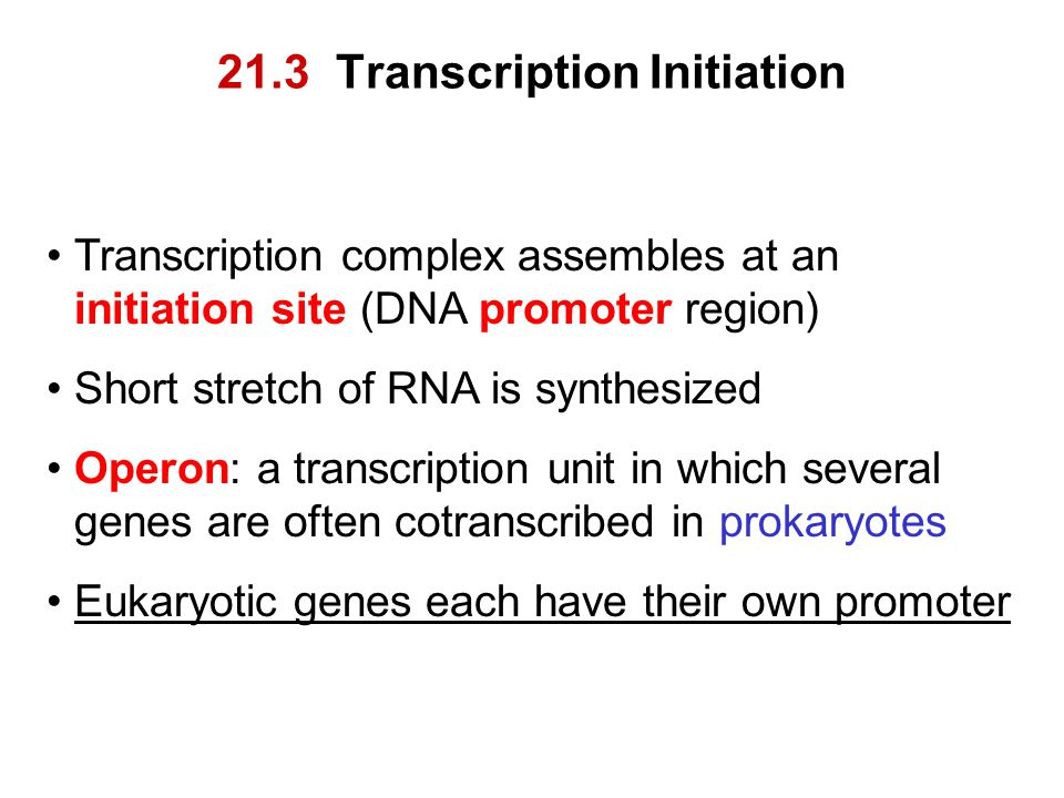 21.3 Transcription Initiation Transcription complex assembles at an initiation site (DNA promoter region) Short stretch of RNA is synthesized Operon: