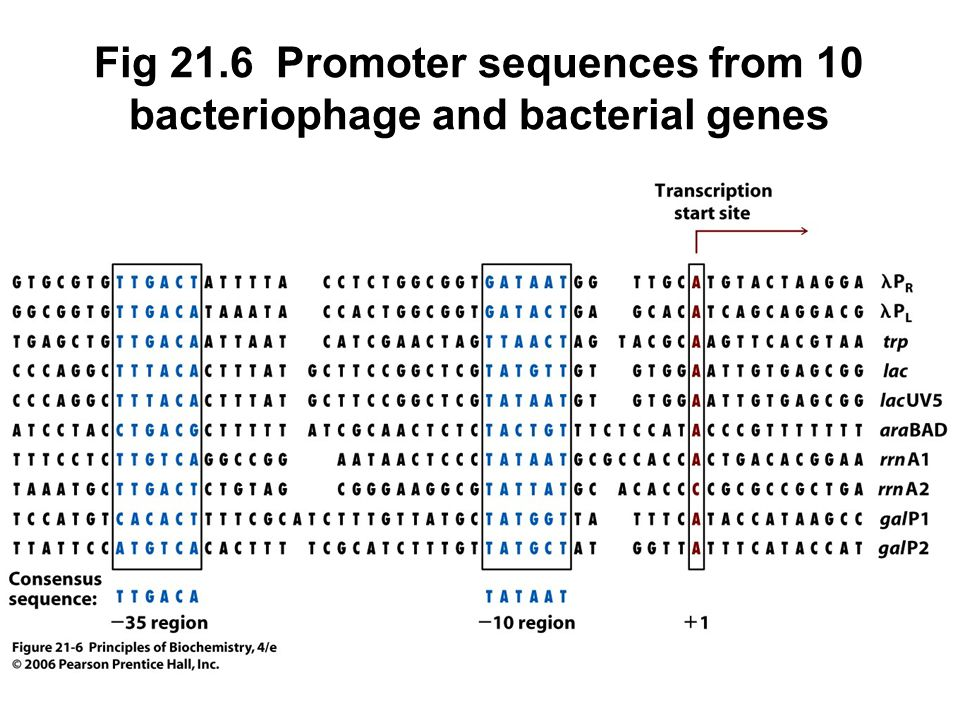 Fig 21.6 Promoter sequences from 10 bacteriophage and bacterial genes