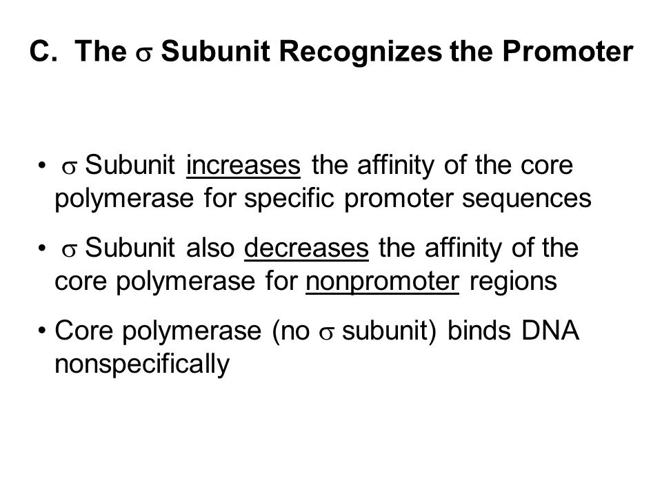 C. The  Subunit Recognizes the Promoter  Subunit increases the affinity of the core polymerase for specific promoter sequences  Subunit also decrea