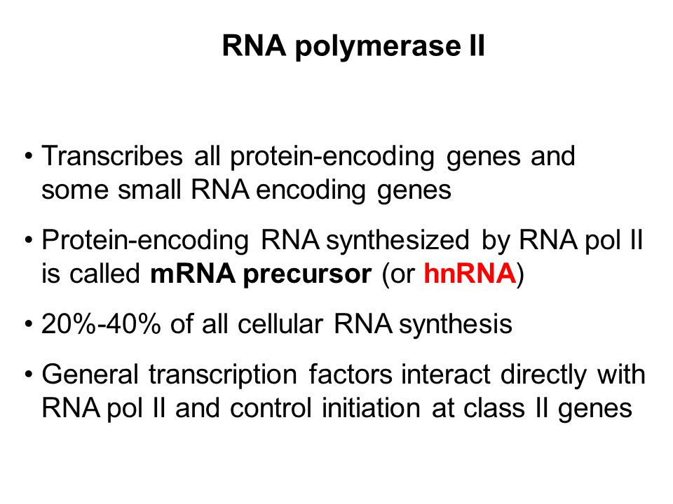 RNA polymerase II Transcribes all protein-encoding genes and some small RNA encoding genes Protein-encoding RNA synthesized by RNA pol II is called mR