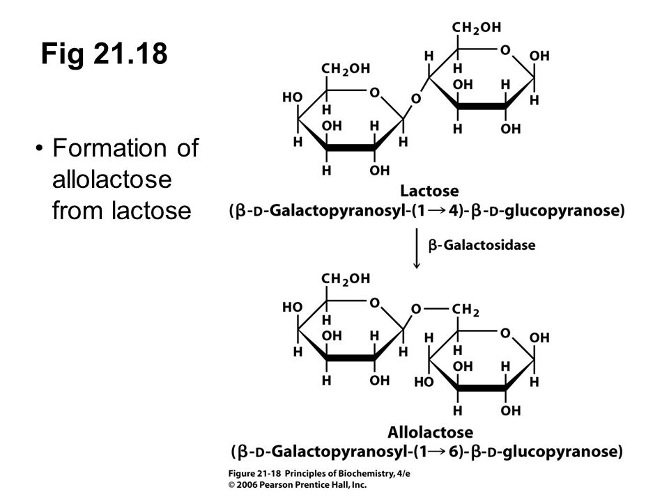 Fig 21.18 Formation of allolactose from lactose