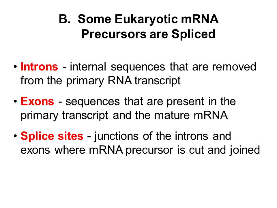 B. Some Eukaryotic mRNA Precursors are Spliced Introns - internal sequences that are removed from the primary RNA transcript Exons - sequences that ar