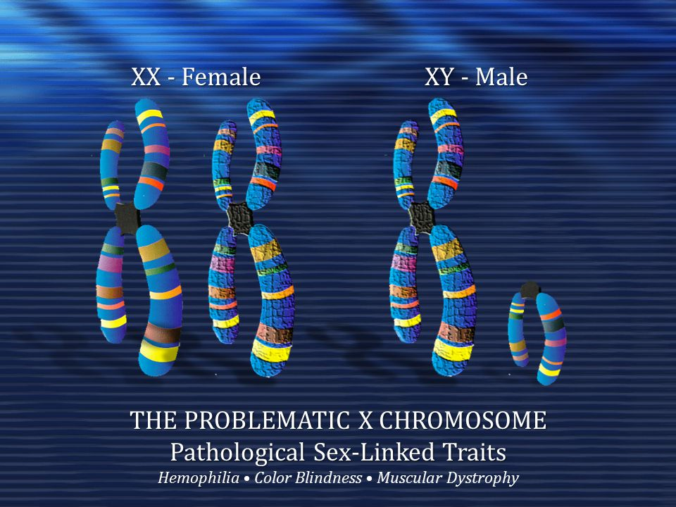 KEY CONCEPTS Chromosomal Sex The Basics: 46 Chromosomes, Two Sex Chromosomes, X's And Y's Andosperm, Gynosperm, And Predicting Sex The Problematic X Chromosome Sex-Linked Traits Gonadal Sex The Indifferent Gonad Gonadal Development Mullerian Ducts--Ovaries and Wolffian Ducts—Testes Hormonal Sex The Adam Principle and the Eve Principle Testosterone (and MIS) and Estrogen Sex-Limited Characteristics