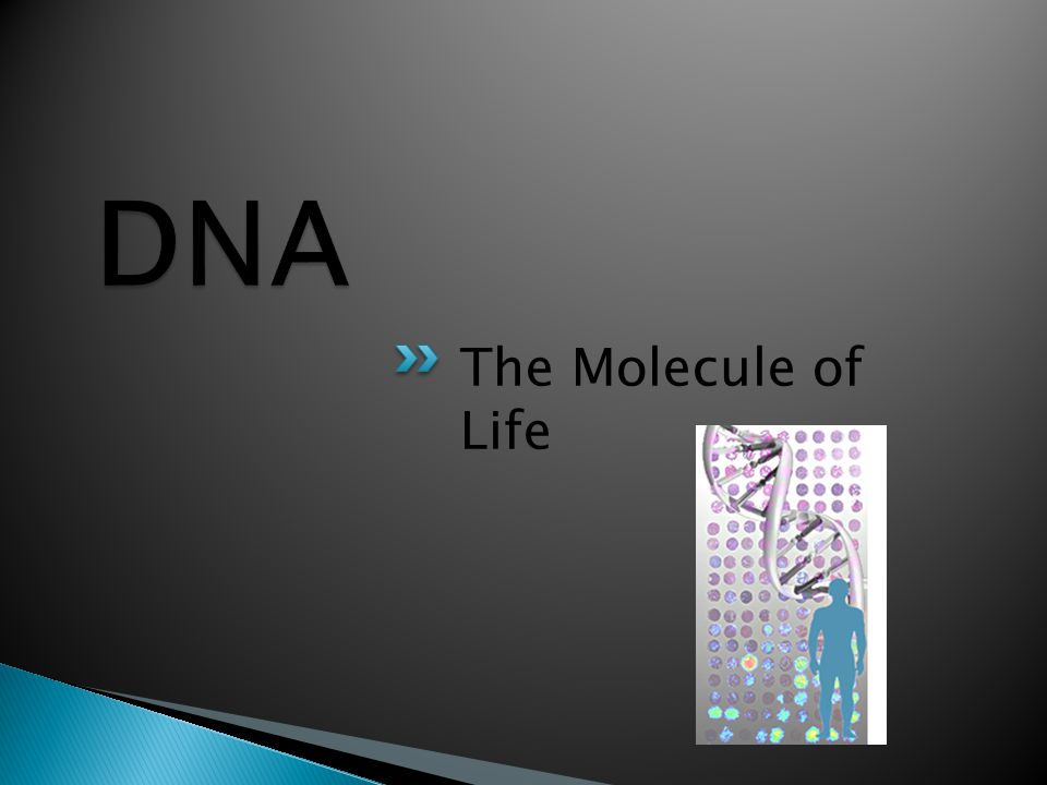 The Molecule of Life