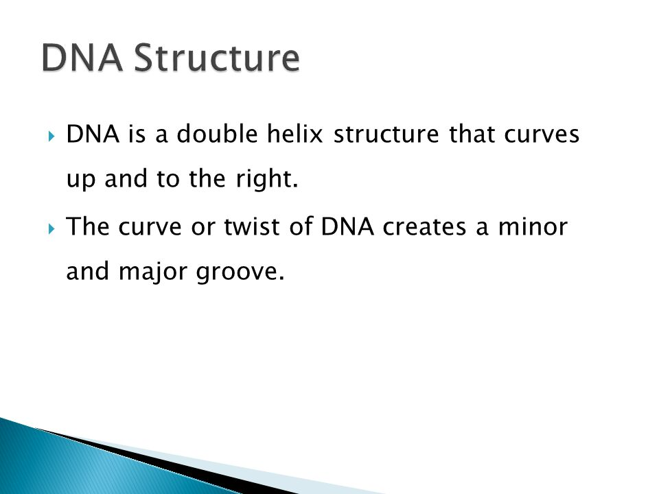  DNA is a double helix structure that curves up and to the right.